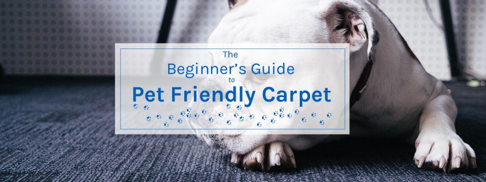 The Beginner's Guide to Pet Friendly Carpet