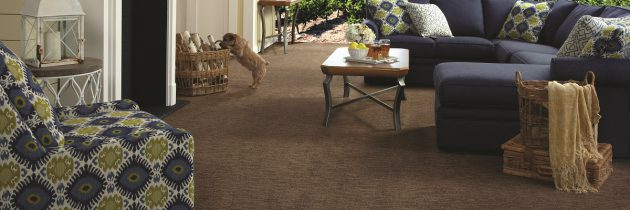 Spring Cleaning Series: Advanced Carpet Care