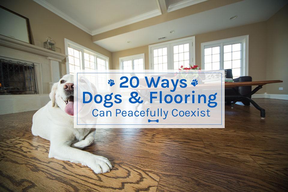 dogs & flooring
