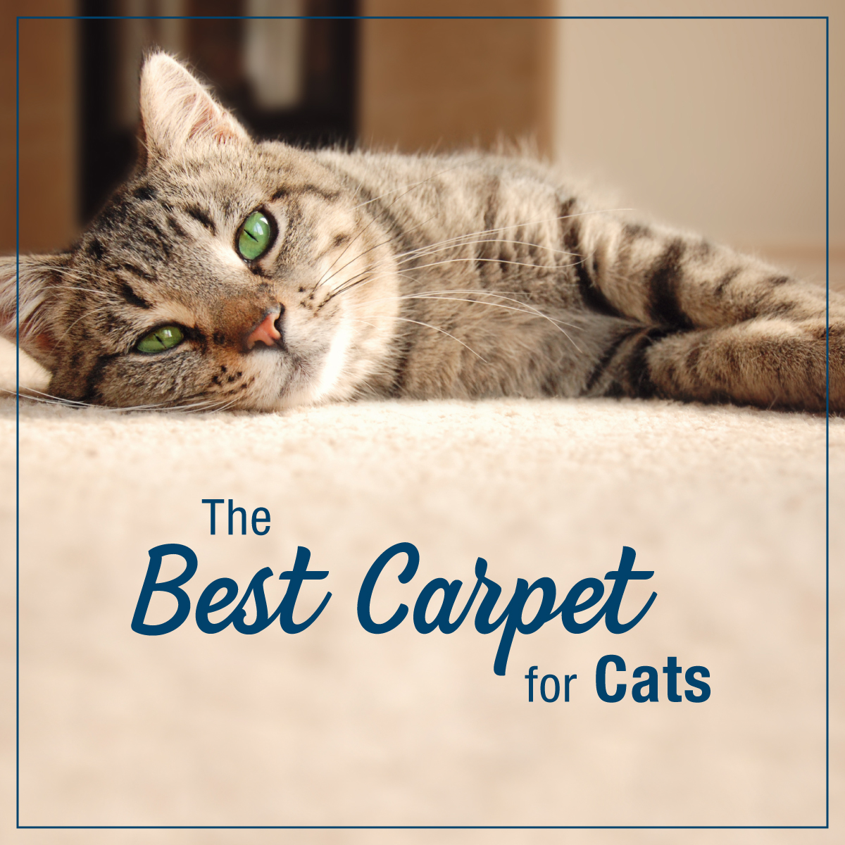 Best Carpet For Cats Empire Today Blog